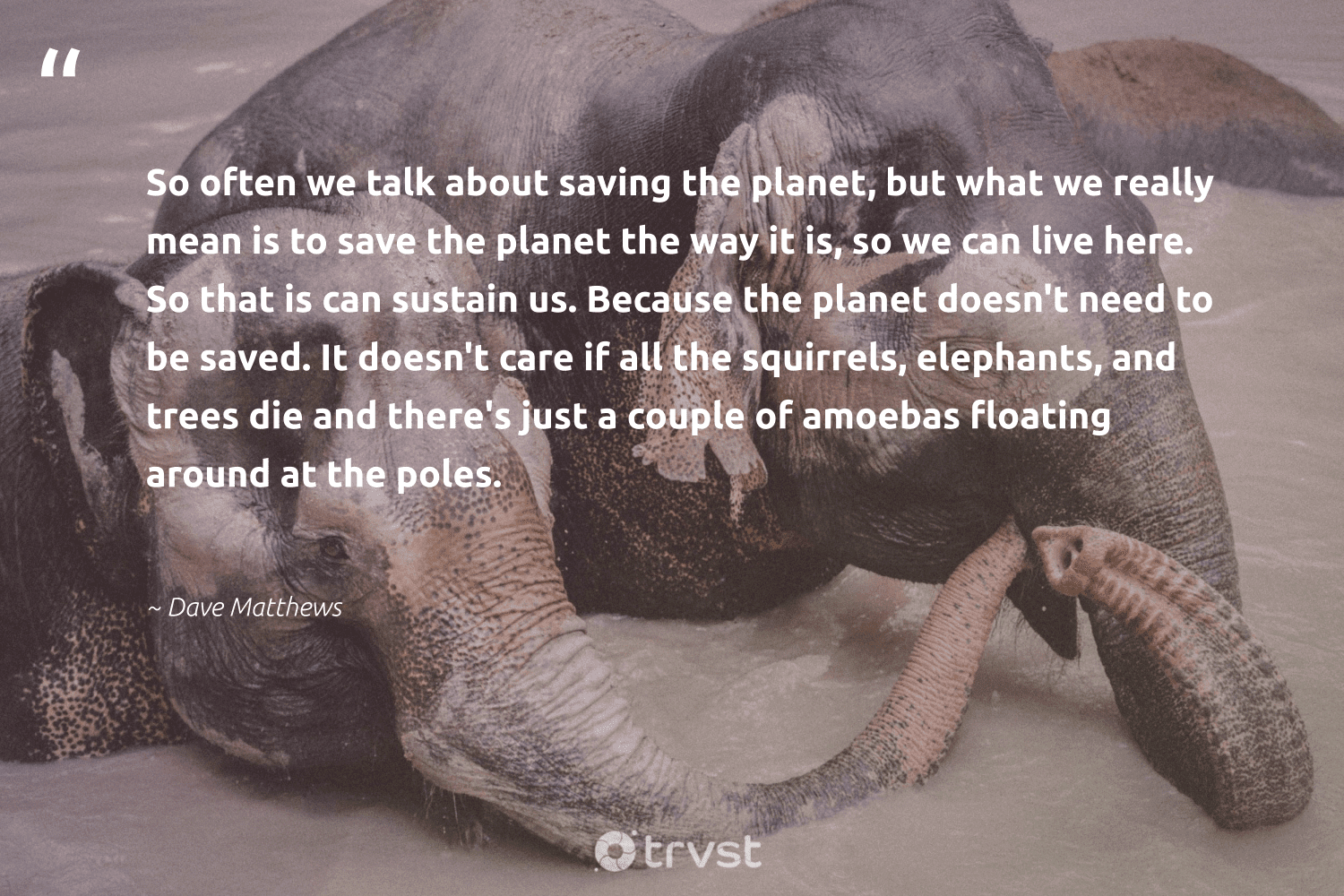 """""""So often we talk about saving the planet, but what we really mean is to save the planet the way it is, so we can live here. So that is can sustain us. Because the planet doesn't need to be saved. It doesn't care if all the squirrels, elephants, and trees die and there's just a couple of amoebas floating around at the poles.""""  - Dave Matthews #trvst #quotes #savetheplanet #planet #trees #elephants #environment #explore #natureseekers #changetheworld #mothernature #endangered"""