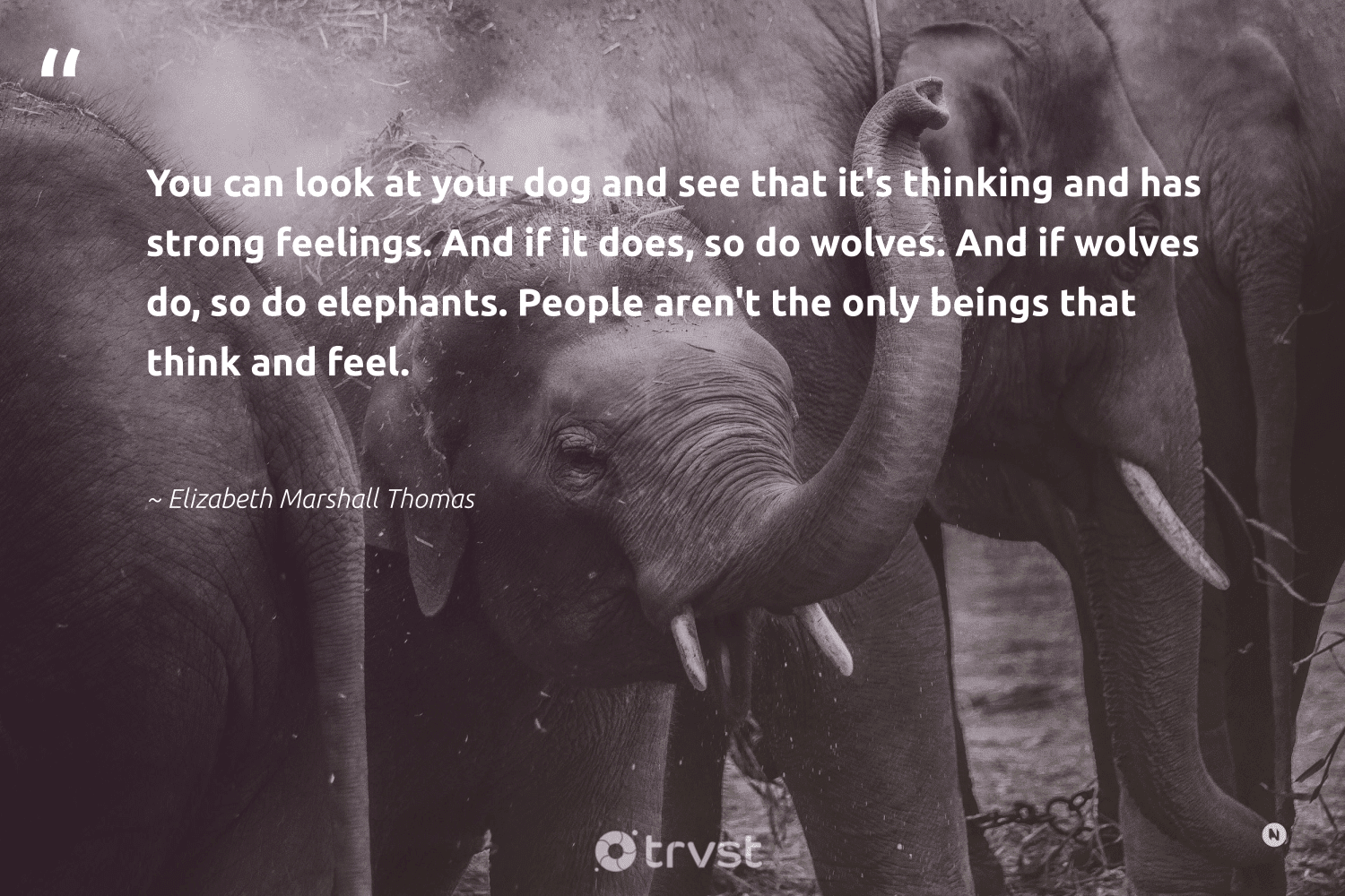 """""""You can look at your dog and see that it's thinking and has strong feelings. And if it does, so do wolves. And if wolves do, so do elephants. People aren't the only beings that think and feel.""""  - Elizabeth Marshall Thomas #trvst #quotes #elephants #endangered #socialchange #savetheelephants #bethechange #wildanimals #dotherightthing #explore #collectiveaction #animals"""