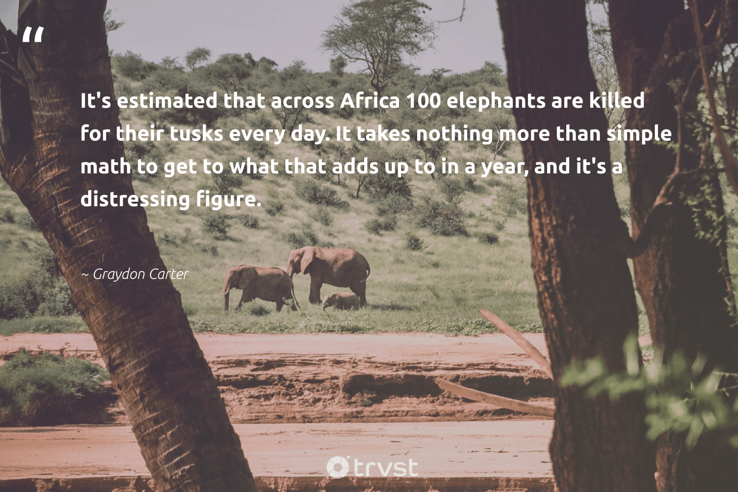 """""""It's estimated that across Africa 100 elephants are killed for their tusks every day. It takes nothing more than simple math to get to what that adds up to in a year, and it's a distressing figure.""""  - Graydon Carter #trvst #quotes #africa #elephants #explore #collectiveaction #endangered #changetheworld #wildgeography #takeaction #elephantlover #beinspired"""