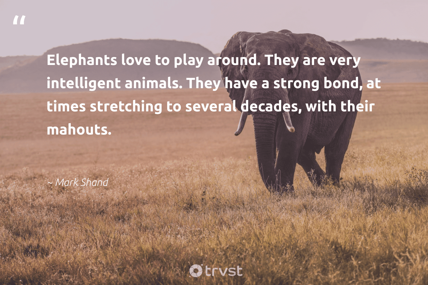 """""""Elephants love to play around. They are very intelligent animals. They have a strong bond, at times stretching to several decades, with their mahouts.""""  - Mark Shand #trvst #quotes #love #animals #elephants #animal #elephantlover #nature #socialchange #animallovers #endangered #geology"""