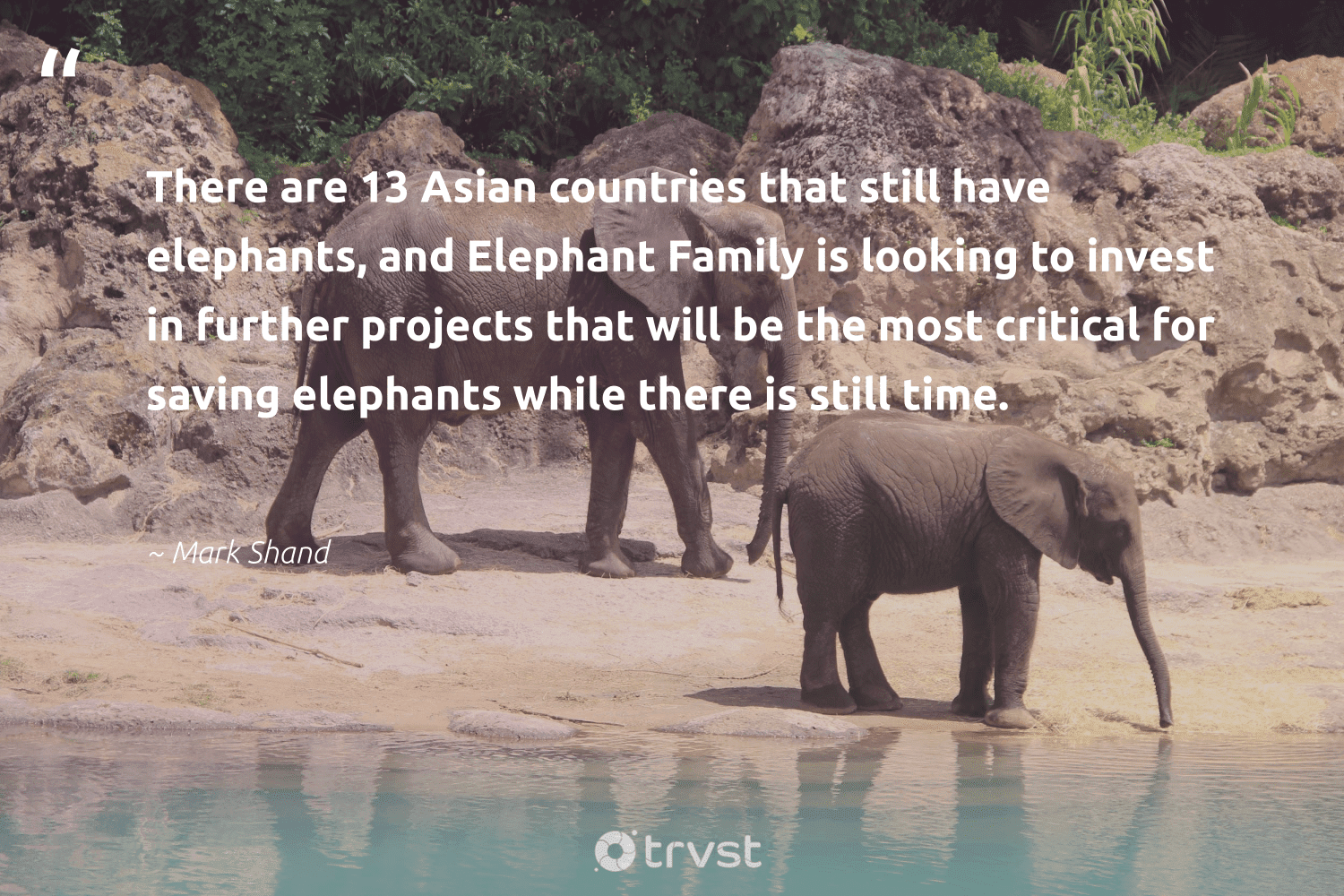 """""""There are 13 Asian countries that still have elephants, and Elephant Family is looking to invest in further projects that will be the most critical for saving elephants while there is still time.""""  - Mark Shand #trvst #quotes #family #elephants #explore #planetearthfirst #elephantlove #gogreen #animals #impact #wildanimals #socialchange"""