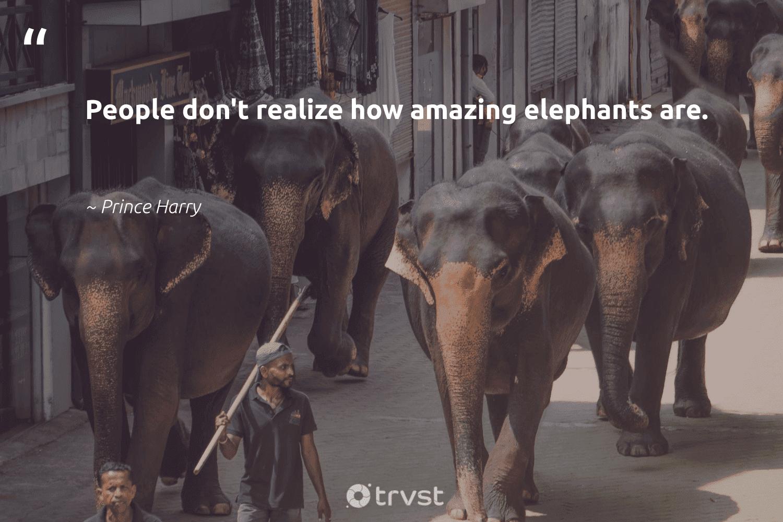 """People don't realize how amazing elephants are.""  - Prince Harry #trvst #quotes #elephants #savetheelephants #socialchange #elephant #takeaction #explore #thinkgreen #endangeredspecies #dogood #wildgeography"