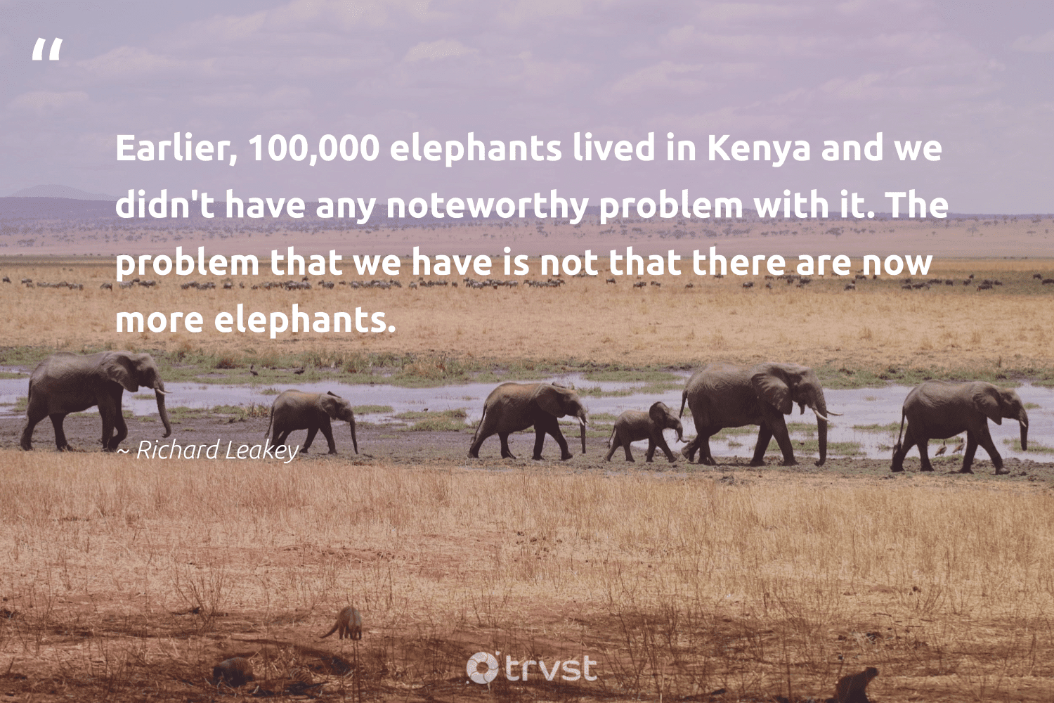 """""""Earlier, 100,000 elephants lived in Kenya and we didn't have any noteworthy problem with it. The problem that we have is not that there are now more elephants.""""  - Richard Leakey #trvst #quotes #elephants #wildgeography #thinkgreen #wildlife #changetheworld #conservation #bethechange #naturelovers #dosomething #endangered"""