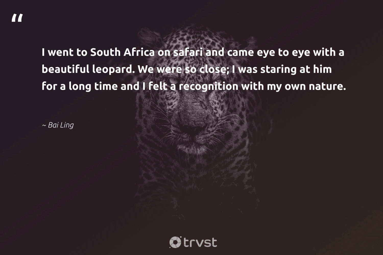 """""""I went to South Africa on safari and came eye to eye with a beautiful leopard. We were so close; I was staring at him for a long time and I felt a recognition with my own nature.""""  - Bai Ling #trvst #quotes #southafrica #africa #nature #safari #leopard #conservation #amazingworld #climatechange #gogreen #mothernature"""