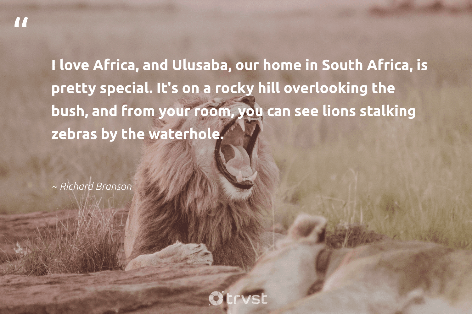 """""""I love Africa, and Ulusaba, our home in South Africa, is pretty special. It's on a rocky hill overlooking the bush, and from your room, you can see lions stalking zebras by the waterhole.""""  - Richard Branson #trvst #quotes #southafrica #africa #love #lions #protectnature #dotherightthing #perfectnature #ecoconscious #conservation #thinkgreen"""