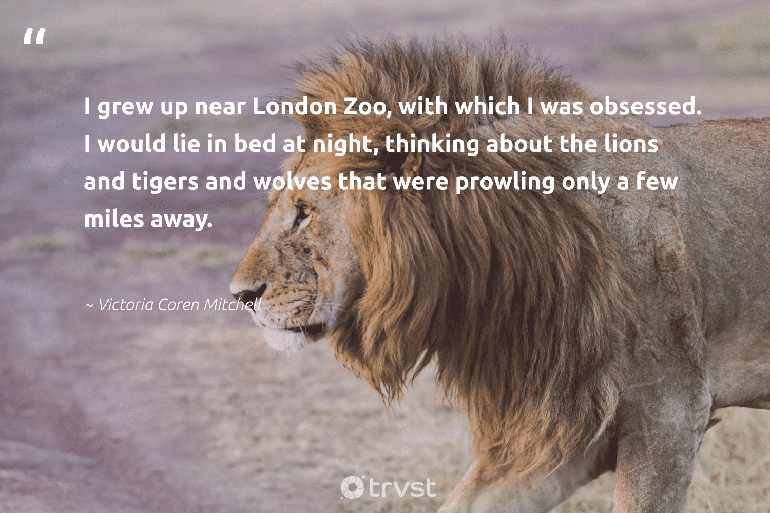 """""""I grew up near London Zoo, with which I was obsessed. I would lie in bed at night, thinking about the lions and tigers and wolves that were prowling only a few miles away.""""  - Victoria Coren Mitchell #trvst #quotes #lions #amazingworld #ecoconscious #wildlife #socialchange #sustainability #planetearthfirst #bigcats #beinspired #conservation"""