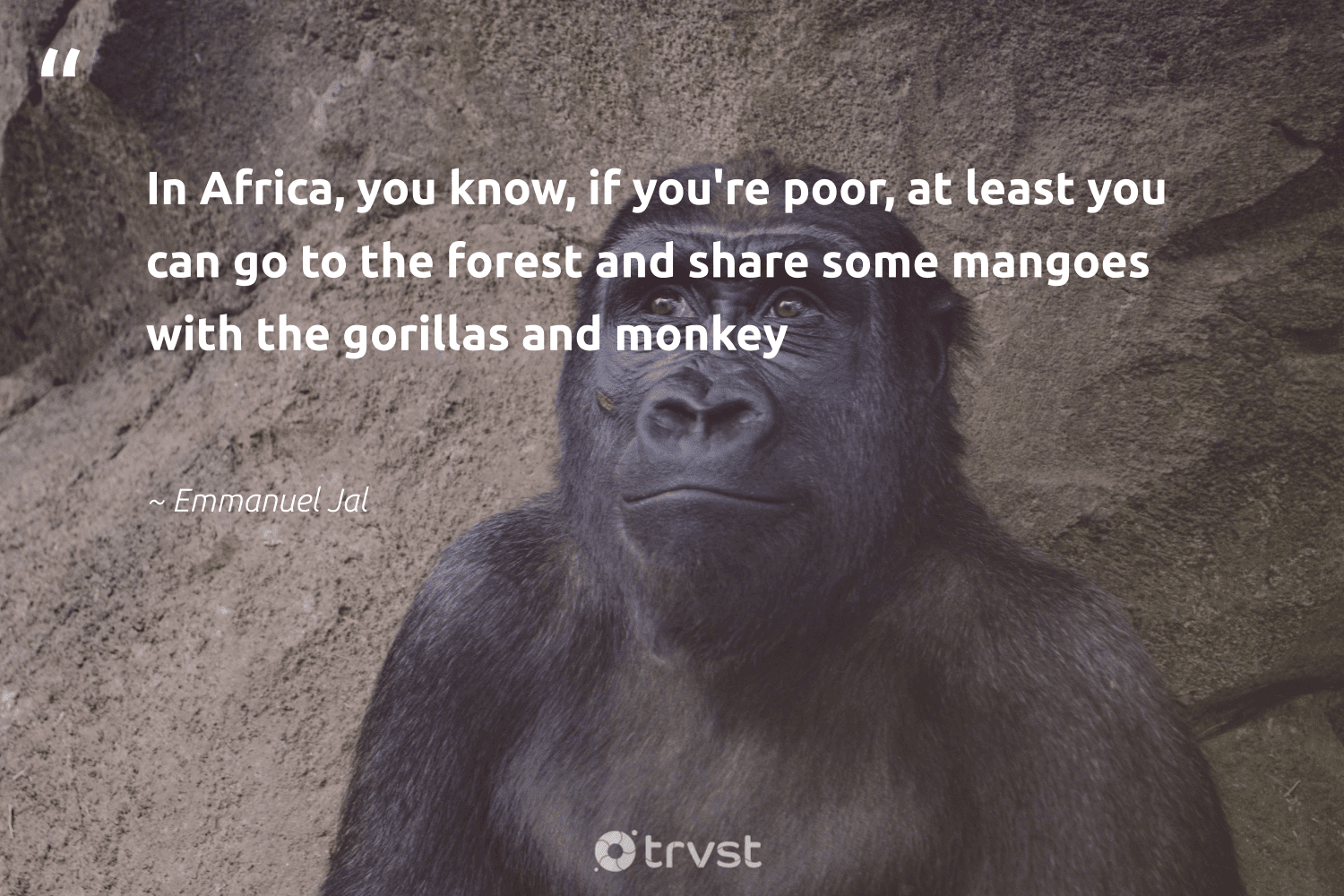 """""""In Africa, you know, if you're poor, at least you can go to the forest and share some mangoes with the gorillas and monkey""""  - Emmanuel Jal #trvst #quotes #africa #forest #poor #monkey #deforestation #wildlifeprotection #gogreen #bethechange #treeplanting #splendidanimals"""