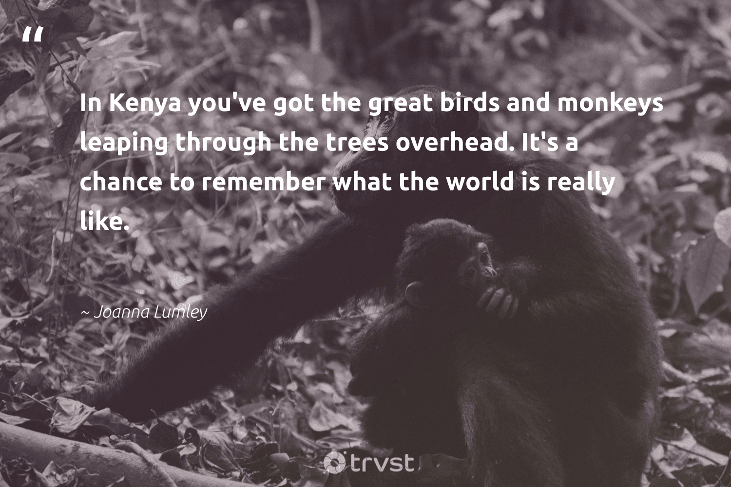 """""""In Kenya you've got the great birds and monkeys leaping through the trees overhead. It's a chance to remember what the world is really like.""""  - Joanna Lumley #trvst #quotes #trees #birds #monkeys #forest #protectnature #natureseekers #impact #arborarmy #majesticwildlife #earth"""