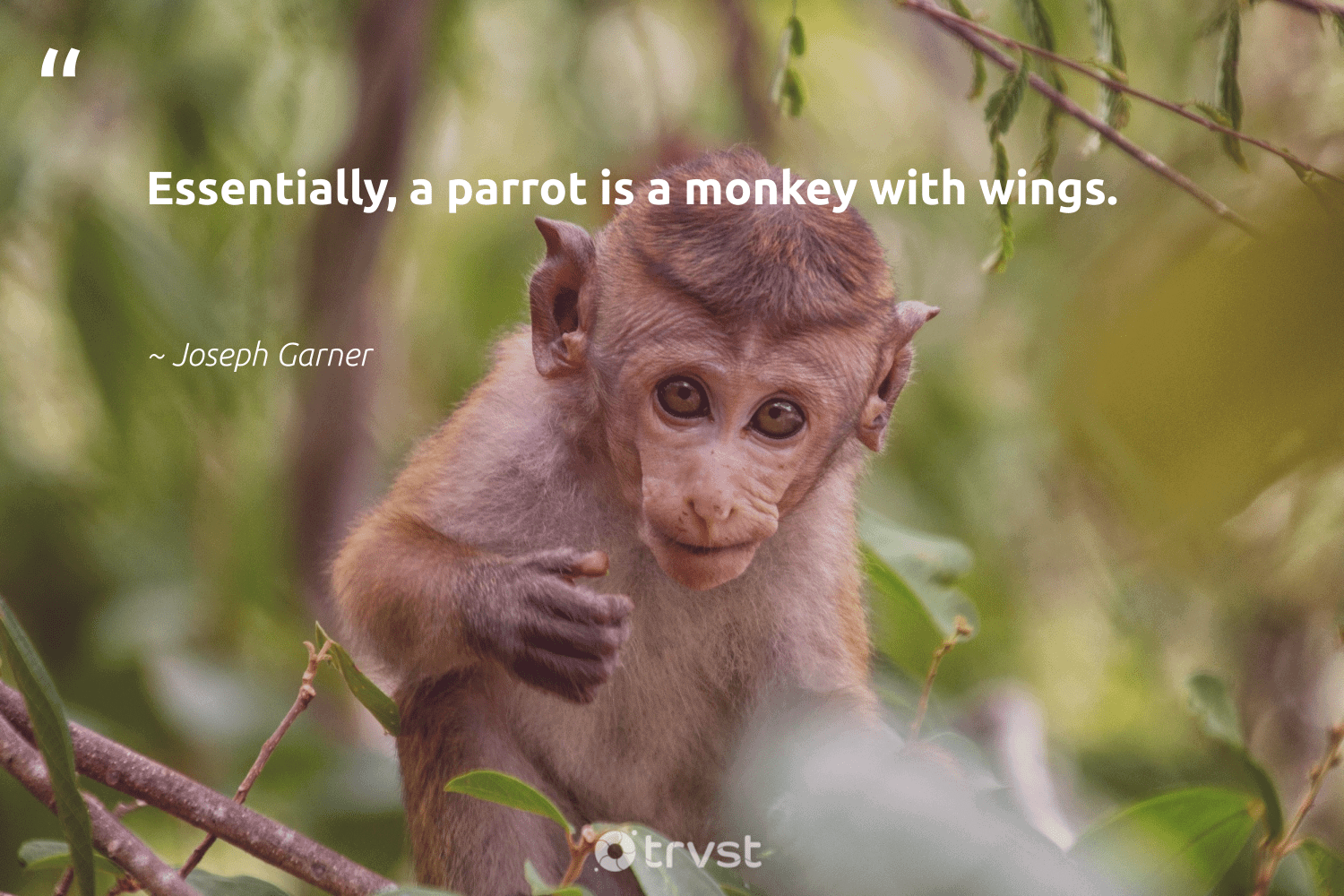 """""""Essentially, a parrot is a monkey with wings.""""  - Joseph Garner #trvst #quotes #parrot #monkey #protectnature #ecoconscious #wild #dotherightthing #biodiversity #bethechange #majesticwildlife #gogreen"""