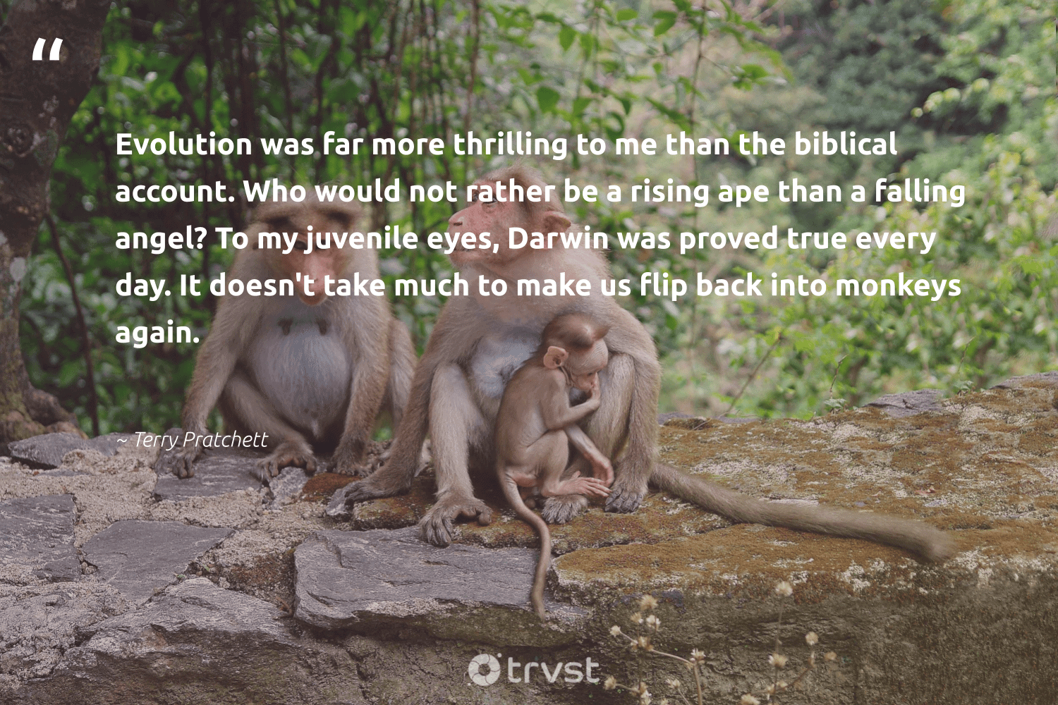 """""""Evolution was far more thrilling to me than the biblical account. Who would not rather be a rising ape than a falling angel? To my juvenile eyes, Darwin was proved true every day. It doesn't take much to make us flip back into monkeys again.""""  - Terry Pratchett #trvst #quotes #monkeys #amazingworld #takeaction #majesticwildlife #socialimpact #animalphotography #dogood #splendidanimals #beinspired #sustainability"""