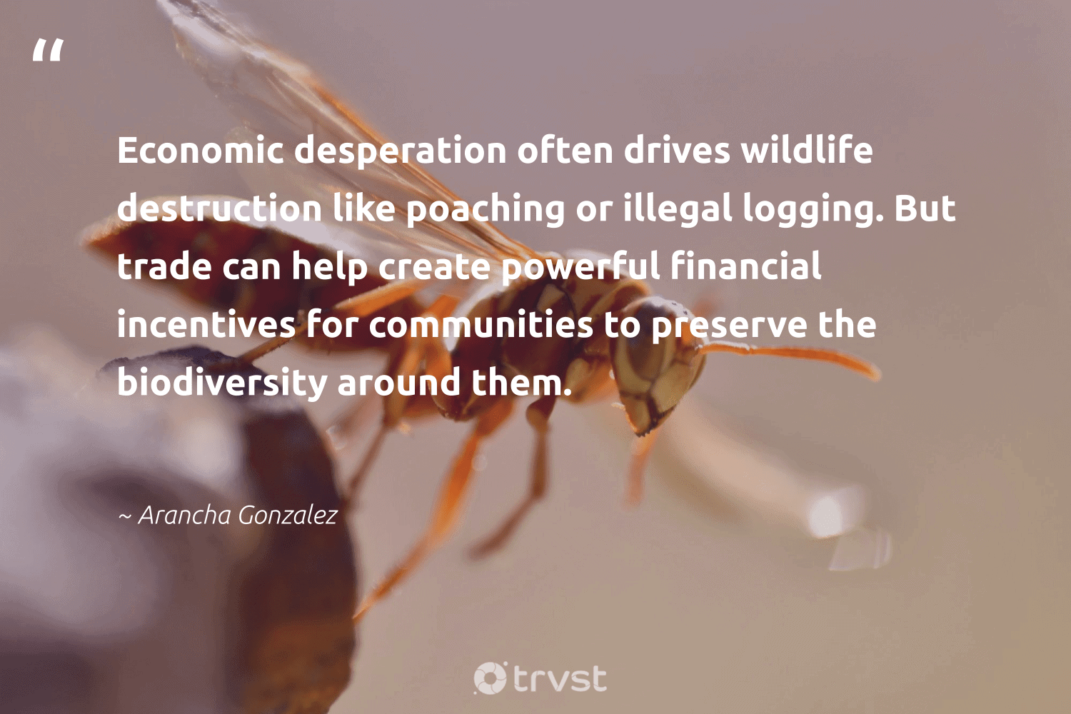 """""""Economic desperation often drives wildlife destruction like poaching or illegal logging. But trade can help create powerful financial incentives for communities to preserve the biodiversity around them.""""  - Arancha Gonzalez #trvst #quotes #biodiversity #wildlife #communities #nature #insects #wildlifephotography #takeaction #conservation #parrot #cheetah"""