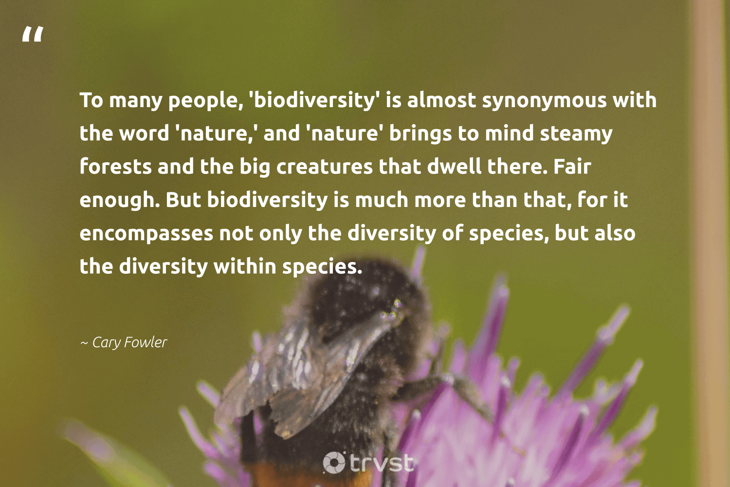 """""""To many people, 'biodiversity' is almost synonymous with the word 'nature,' and 'nature' brings to mind steamy forests and the big creatures that dwell there. Fair enough. But biodiversity is much more than that, for it encompasses not only the diversity of species, but also the diversity within species.""""  - Cary Fowler #trvst #quotes #biodiversity #nature #diversity #conservation #earth #bigcat #palaeontology #socialimpact #environment #mothernature"""