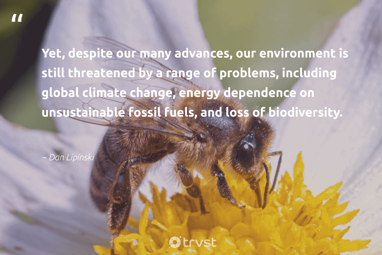 """""""Yet, despite our many advances, our environment is still threatened by a range of problems, including global climate change, energy dependence on unsustainable fossil fuels, and loss of biodiversity.""""  - Dan Lipinski #trvst #quotes #biodiversity #environment #climatechange #energy #fossilfuels #fossil #climate #nature #coal #cheetah"""