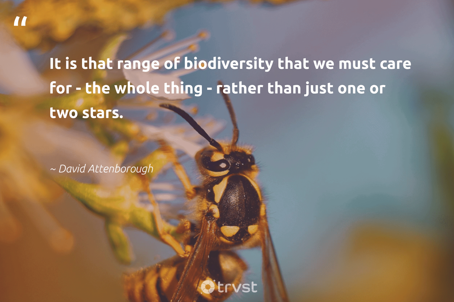 """""""It is that range of biodiversity that we must care for - the whole thing - rather than just one or two stars.""""  - David Attenborough #trvst #quotes #biodiversity #environment #insects #science #bethechange #nature #birds #sanctuary #impact #conservation"""
