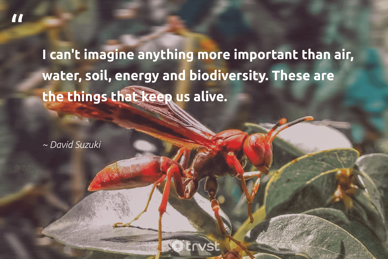 """""""I can't imagine anything more important than air, water, soil, energy and biodiversity. These are the things that keep us alive.""""  - David Suzuki #trvst #quotes #energy #water #biodiversity #oceanpollution #spider #earth #ecoconscious #ocean #flowers #wildernessnation"""
