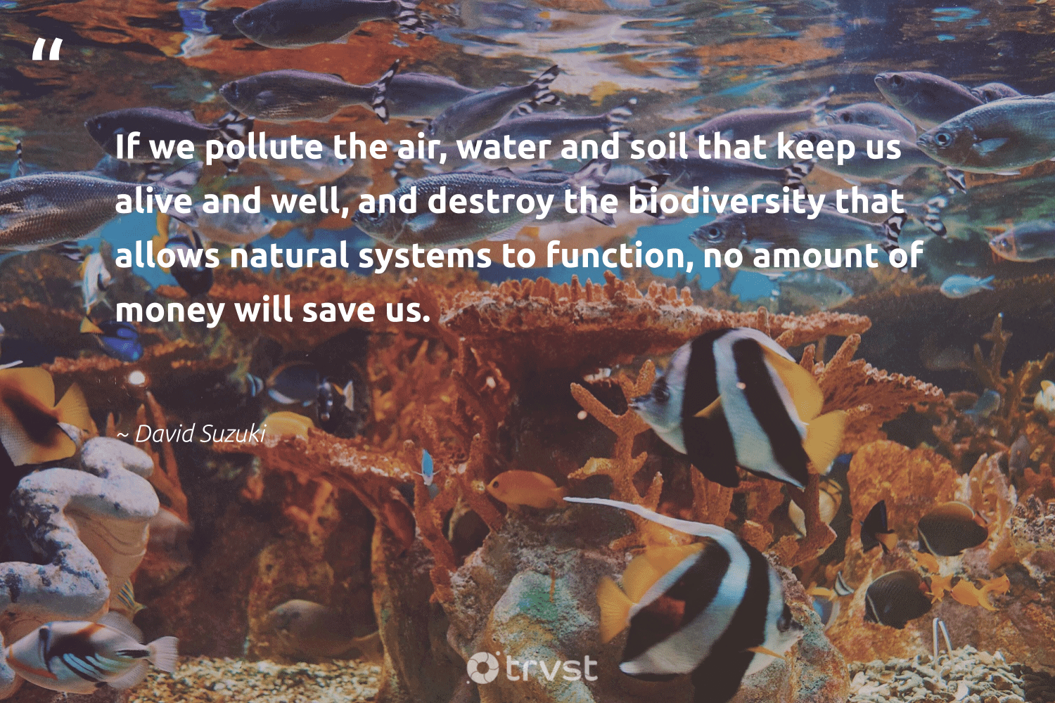 """""""If we pollute the air, water and soil that keep us alive and well, and destroy the biodiversity that allows natural systems to function, no amount of money will save us.""""  - David Suzuki #trvst #quotes #water #pollute #natural #biodiversity #spill #insects #noplanetb #bethechange #pollution #sanctuary"""