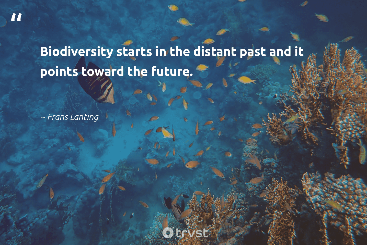 """""""Biodiversity starts in the distant past and it points toward the future.""""  - Frans Lanting #trvst #quotes #biodiversity #environment #science #fish #bethechange #conservation #bird #nature #thinkgreen #natural"""