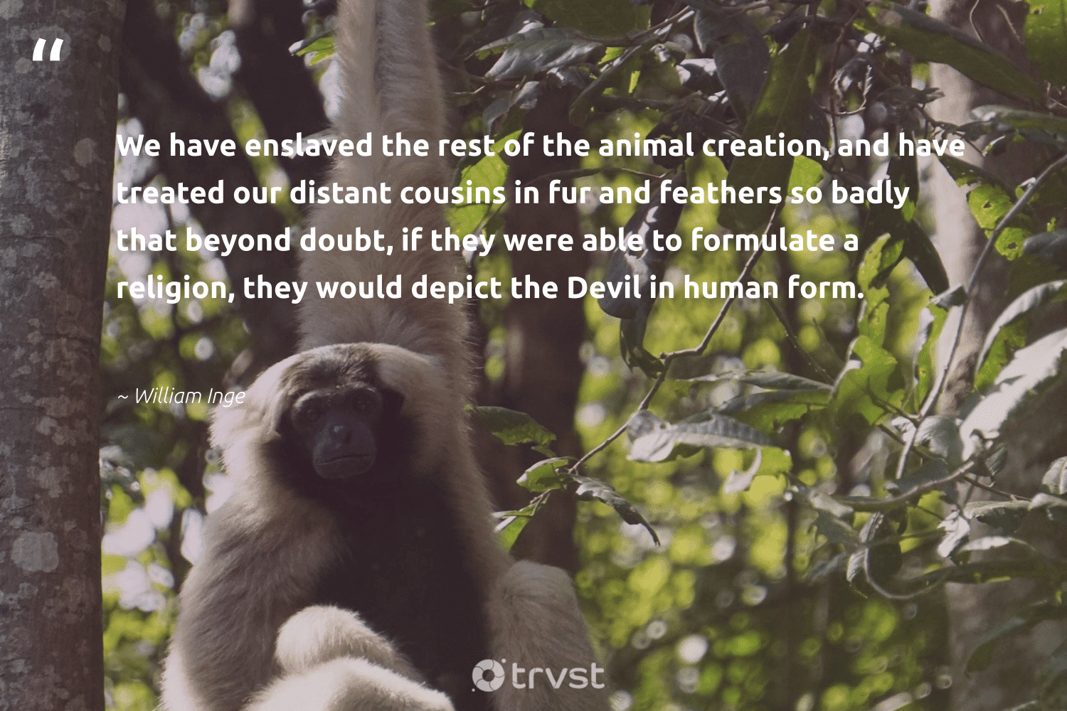 """""""We have enslaved the rest of the animal creation, and have treated our distant cousins in fur and feathers so badly that beyond doubt, if they were able to formulate a religion, they would depict the Devil in human form.""""  - William Inge #trvst #quotes #wildlife #animal #animallovers #flowers #parrot #socialchange #animals #insect #biology #gogreen"""