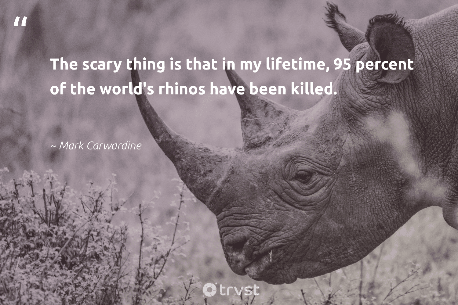 """""""The scary thing is that in my lifetime, 95 percent of the world's rhinos have been killed.""""  - Mark Carwardine #trvst #quotes #ourplanetdaily #socialimpact #rhino #impact #bigfive #dogood #animalphotography #socialchange #amazingworld #collectiveaction"""