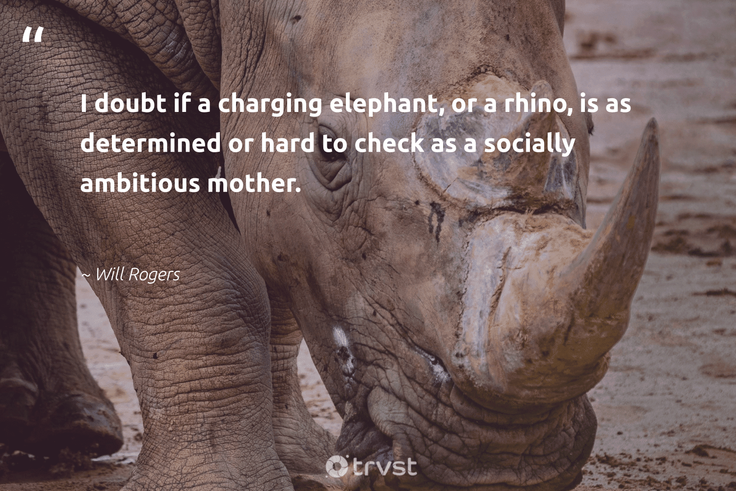 """""""I doubt if a charging elephant, or a rhino, is as determined or hard to check as a socially ambitious mother.""""  - Will Rogers #trvst #quotes #rhino #amazingworld #bethechange #conservation #planetearthfirst #wildlifeprotection #dogood #majesticwildlife #dosomething #animalphotography"""