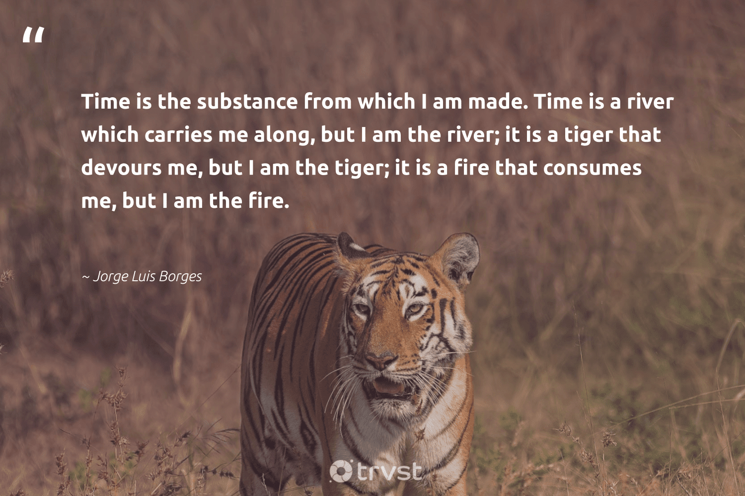 """""""Time is the substance from which I am made. Time is a river which carries me along, but I am the river; it is a tiger that devours me, but I am the tiger; it is a fire that consumes me, but I am the fire.""""  - Jorge Luis Borges #trvst #quotes #river #tiger #water #protectnature #environmentallyfriendly #collectiveaction #oceanpollution #splendidanimals #volunteer #bethechange"""