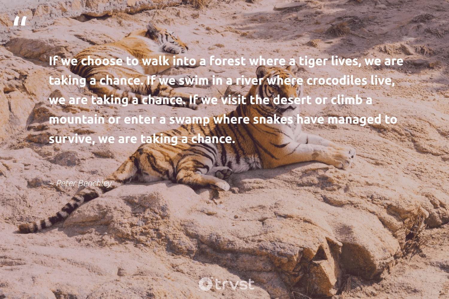 """""""If we choose to walk into a forest where a tiger lives, we are taking a chance. If we swim in a river where crocodiles live, we are taking a chance. If we visit the desert or climb a mountain or enter a swamp where snakes have managed to survive, we are taking a chance.""""  - Peter Benchley #trvst #quotes #river #mountain #forest #tiger #treeplanting #biodiversity #green #dosomething #trees #ourplanetdaily"""