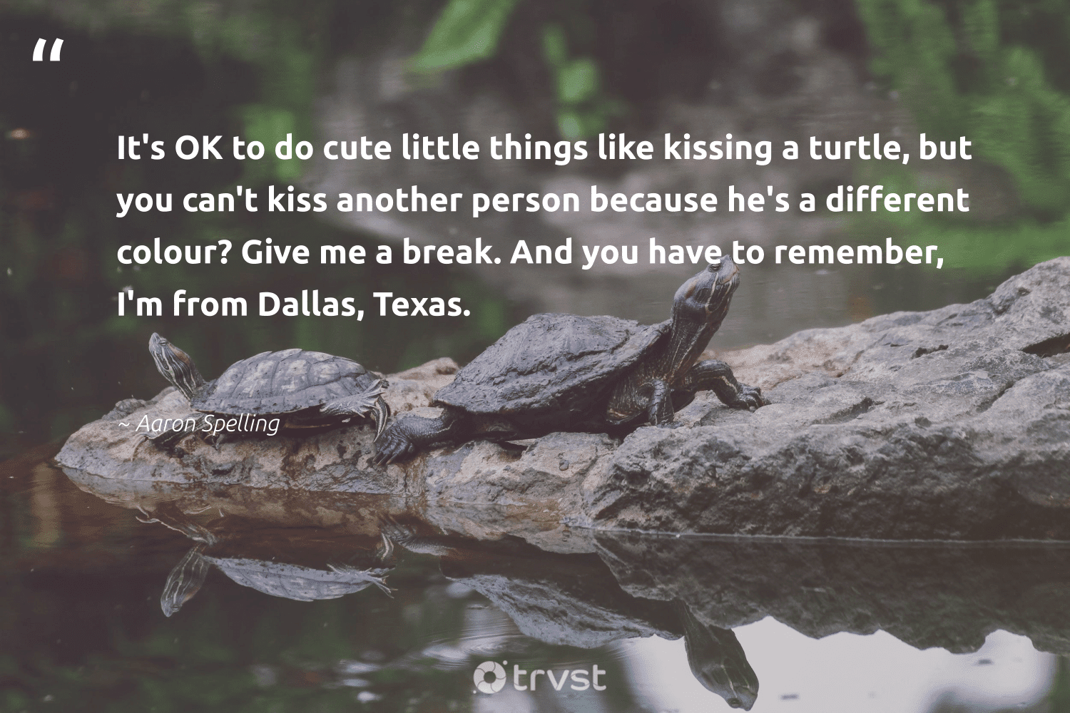 """""""It's OK to do cute little things like kissing a turtle, but you can't kiss another person because he's a different colour? Give me a break. And you have to remember, I'm from Dallas, Texas.""""  - Aaron Spelling #trvst #quotes #turtle #turtles #collectiveaction #savetheturtle #dogood #wildlife #thinkgreen #oceanconservation #ecoconscious #biodiversity"""