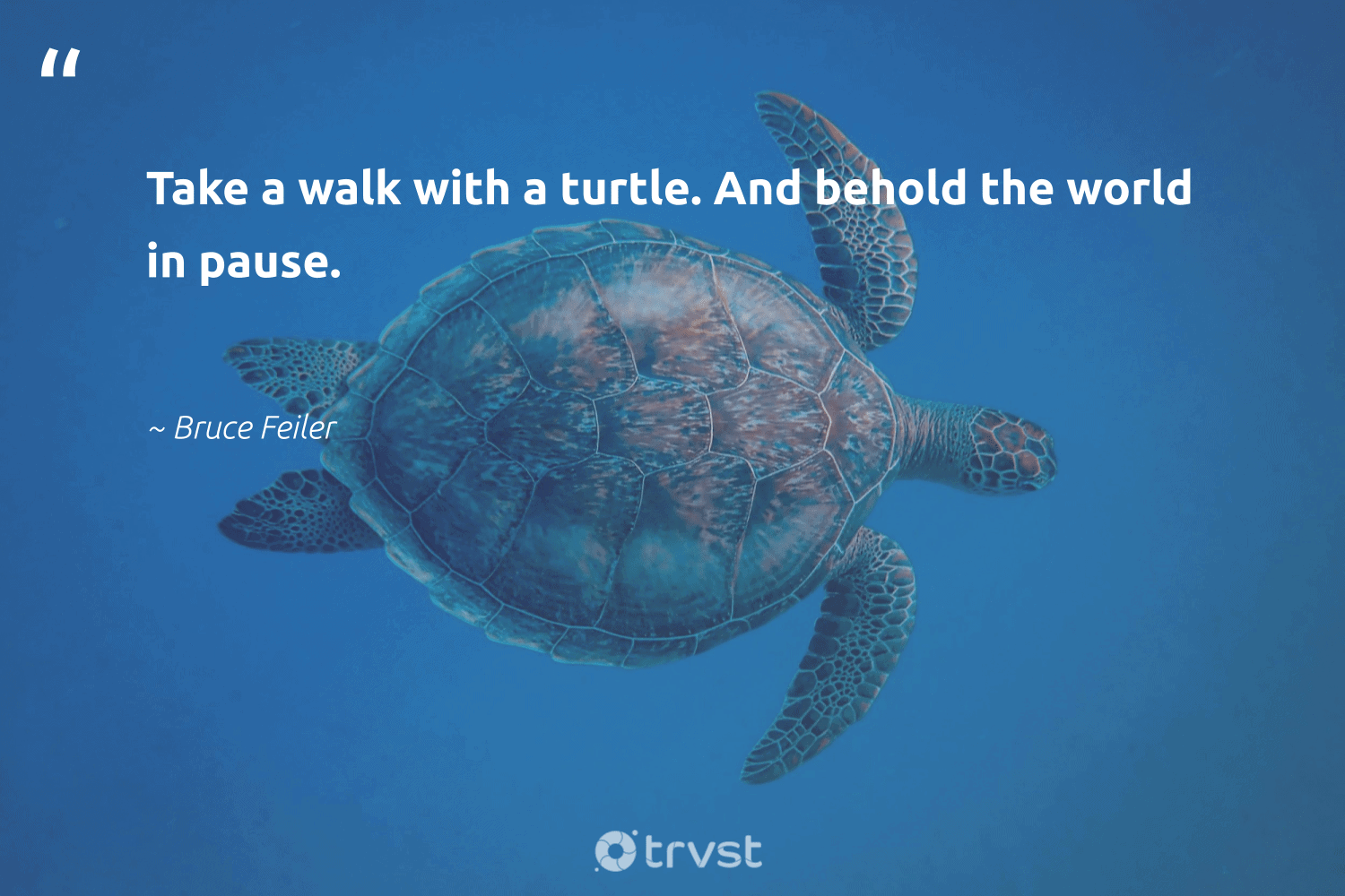 """""""Take a walk with a turtle. And behold the world in pause.""""  - Bruce Feiler #trvst #quotes #turtle #wildlifeprotection #thinkgreen #savetheoceans #gogreen #perfectnature #collectiveaction #marinelife #ecoconscious #aquaticlife"""