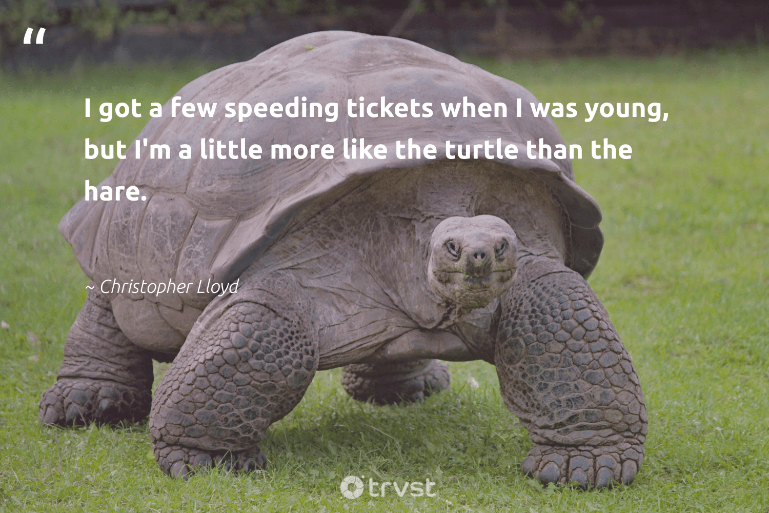 """""""I got a few speeding tickets when I was young, but I'm a little more like the turtle than the hare.""""  - Christopher Lloyd #trvst #quotes #turtle #perfectnature #impact #sustainability #gogreen #protectnature #changetheworld #aquaticlife #planetearthfirst #oceans"""