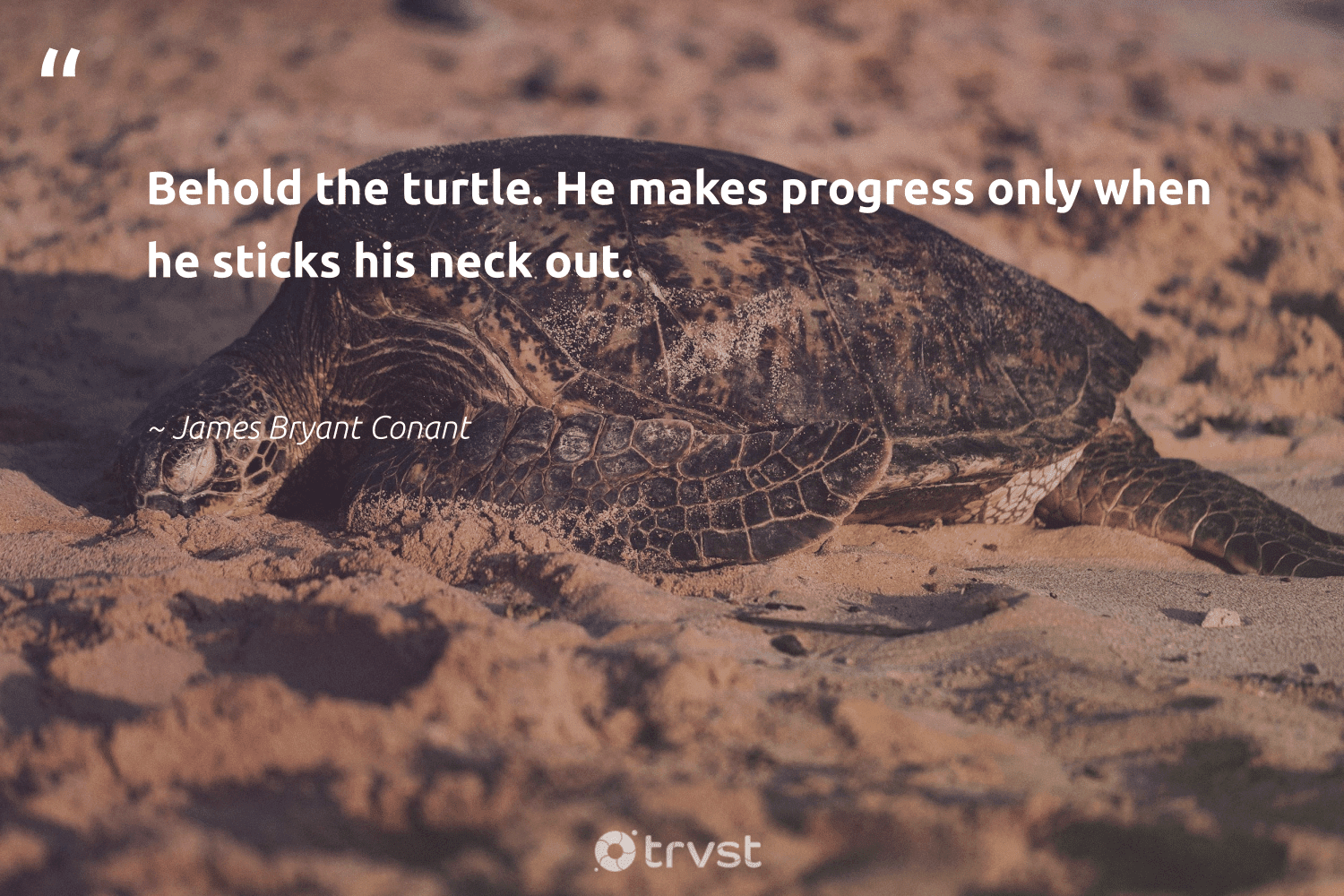 """""""Behold the turtle. He makes progress only when he sticks his neck out.""""  - James Bryant Conant #trvst #quotes #turtle #oceans #bethechange #oceanconservation #changetheworld #aquaticlife #beinspired #amazingworld #collectiveaction #savetheturtle"""