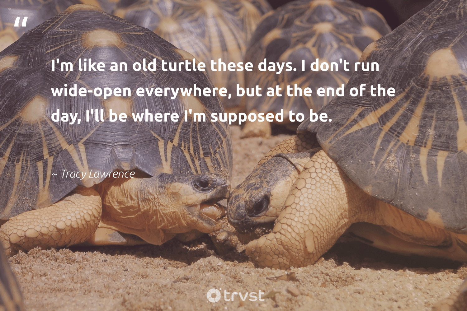 """""""I'm like an old turtle these days. I don't run wide-open everywhere, but at the end of the day, I'll be where I'm supposed to be.""""  - Tracy Lawrence #trvst #quotes #turtle #healthyocean #collectiveaction #protecttheoceans #planetearthfirst #savetheoceans #impact #oceans #beinspired #oceanlove"""