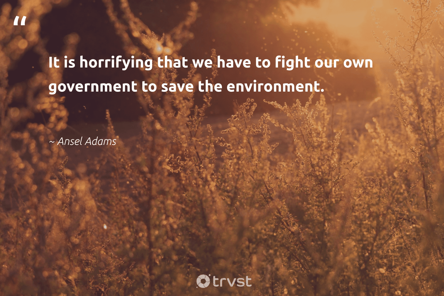 """""""It is horrifying that we have to fight our own government to save the environment.""""  - Ansel Adams #trvst #quotes #environment #planet #earth #naturelovers #beinspired #nature #environmentallyfriendly #sustainable #collectiveaction #conservation"""