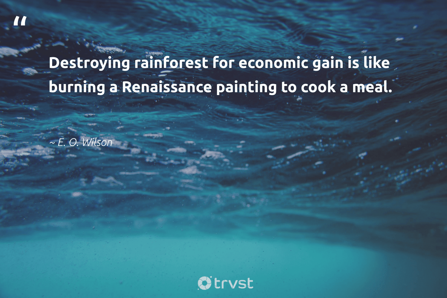 """""""Destroying rainforest for economic gain is like burning a Renaissance painting to cook a meal.""""  - E. O. Wilson #trvst #quotes #green #beinspired #ecofriendly #socialchange #sustainability #impact #getoutside #changetheworld #naturelovers #socialimpact"""