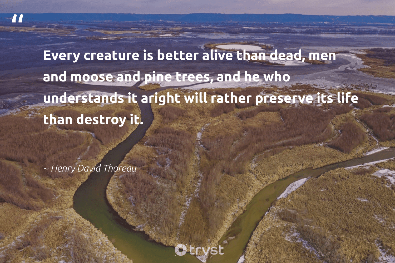 """""""Every creature is better alive than dead, men and moose and pine trees, and he who understands it aright will rather preserve its life than destroy it.""""  - Henry David Thoreau #trvst #quotes #deforestation #trees #plantatree #wildernessnation #ecofriendly #dotherightthing #rainforest #environmentallyfriendly #green #beinspired"""