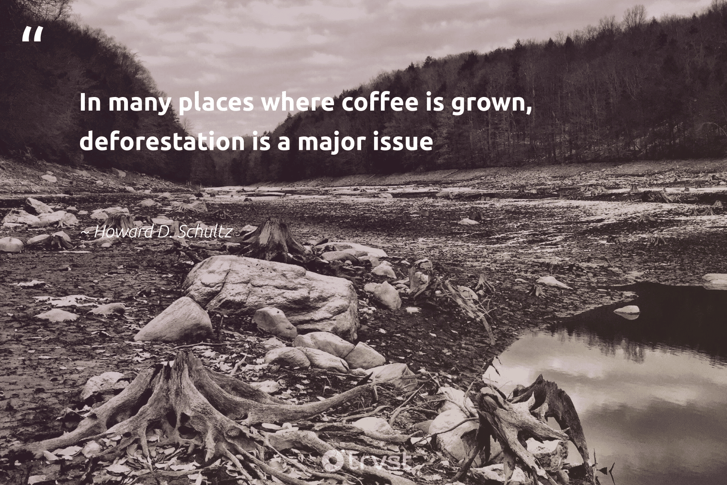 """""""In many places where coffee is grown, deforestation is a major issue""""  - Howard D. Schultz #trvst #quotes"""