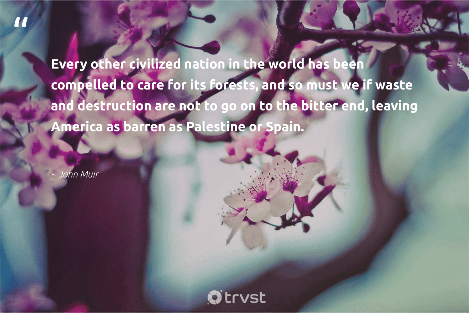 """""""Every other civilized nation in the world has been compelled to care for its forests, and so must we if waste and destruction are not to go on to the bitter end, leaving America as barren as Palestine or Spain.""""  - John Muir #trvst #quotes #waste #climatechange #impact #wildlifeplanet #collectiveaction #sustainable #dotherightthing #sustainableliving #changetheworld #noplanetb"""
