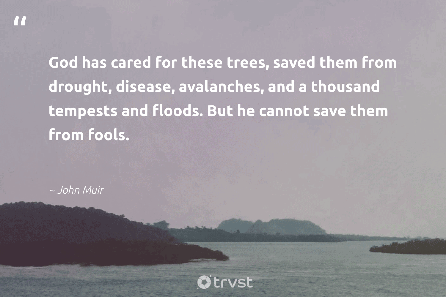 """""""God has cared for these trees, saved them from drought, disease, avalanches, and a thousand tempests and floods. But he cannot save them from fools.""""  - John Muir #trvst #quotes #deforestation #trees #plantatree #sustainableliving #wildlifeplanet #gogreen #rainforest #getoutside #sustainability #beinspired"""