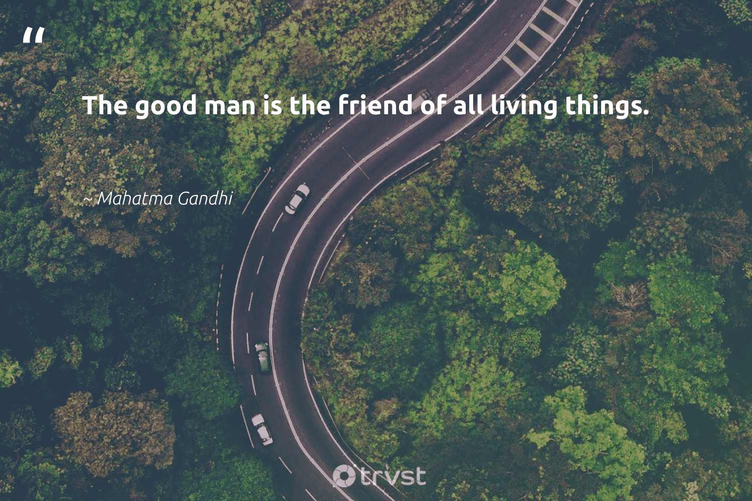 """""""The good man is the friend of all living things.""""  - Mahatma Gandhi #trvst #quotes #gogreen #takeaction #wildlifeplanet #beinspired #eco #impact #giveback #dogood #noplanetb #socialchange"""