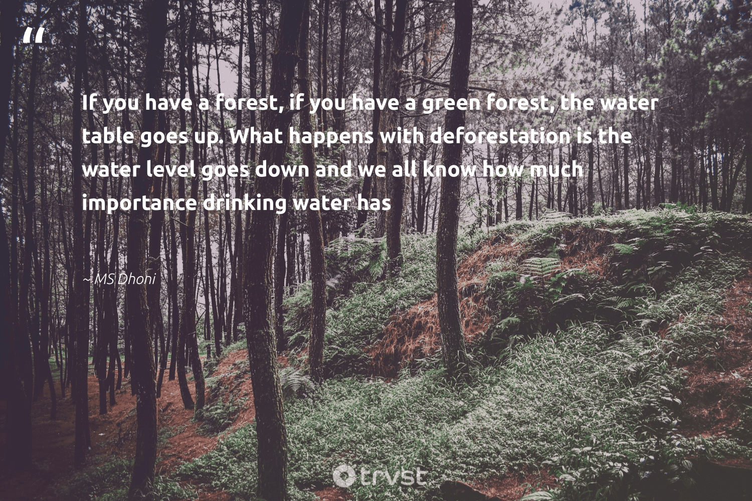 """""""If you have a forest, if you have a green forest, the water table goes up. What happens with deforestation is the water level goes down and we all know how much importance drinking water has""""  - MS Dhoni #trvst #quotes"""