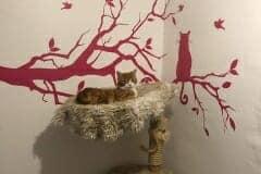 Kratzbaum Katzenhoffnung Steiermark - das Paradies für HandiCATs / behinderte Katzen