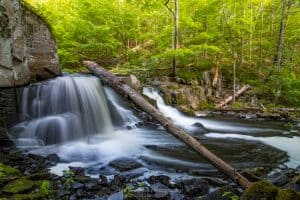 A morning photo of Middle Falls, a waterfall on Black Creek in Esopus, NY, with a downed tree hanging over the edge of the fall.