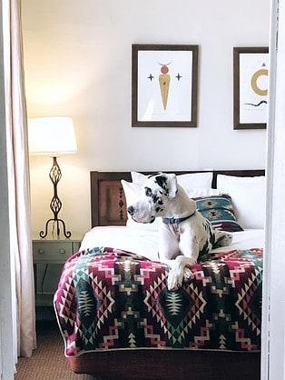 Odie enjoying a pet-friendly hotel.