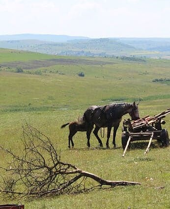 A mare and her foal in Romania
