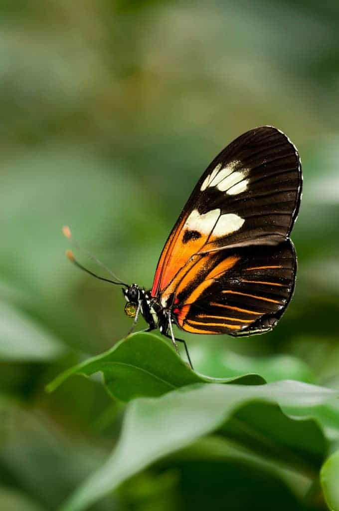 macro photography tips: butterfly form different angles