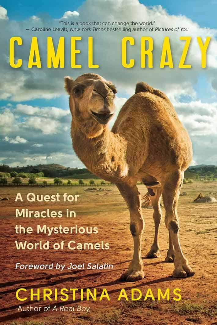 Camel Crazy Book Cover