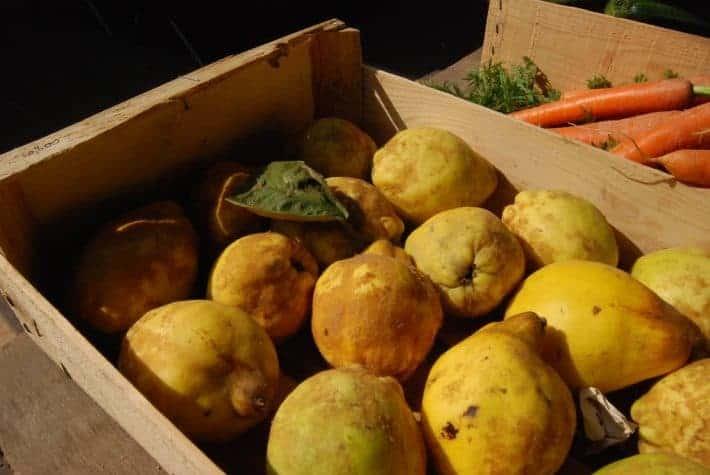 Ugly fruit food waste tip