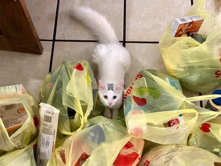 Problem With Plastic Bags