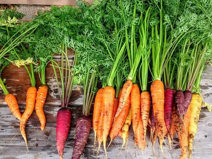 Heirloom Plants and Vegetables for Bees