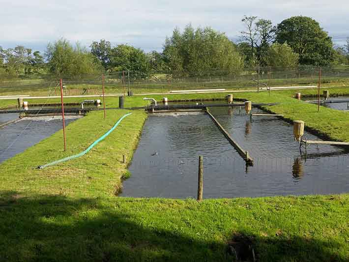Sustainable Fish Farming Ponds