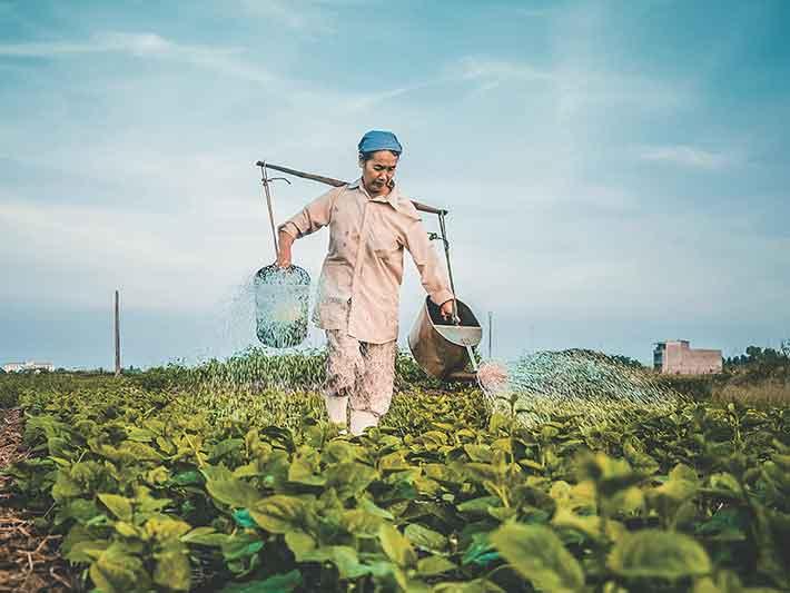 Organic vs Biodynamic Farming